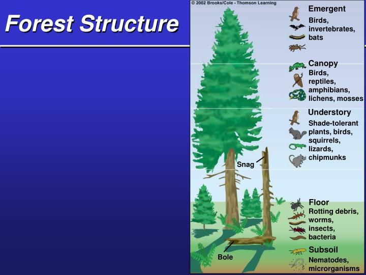 Forest Structure