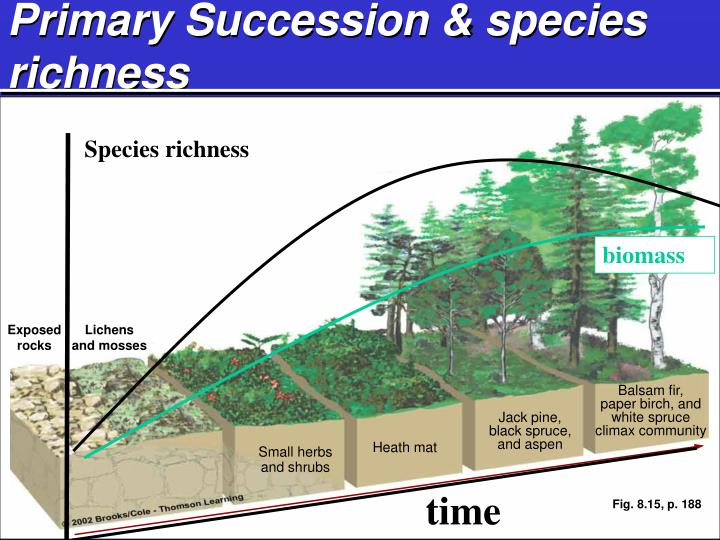 Primary Succession & species richness