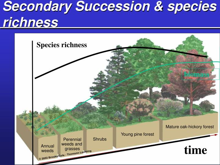 Secondary Succession & species richness