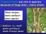 tropical forest are rich in species because of large area many strata