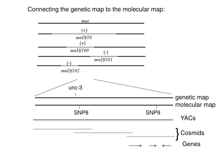 Connecting the genetic map to the molecular map: