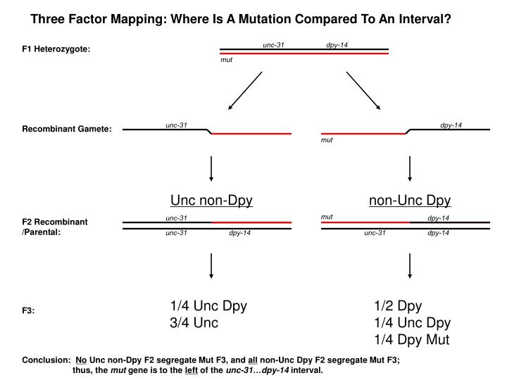 Three Factor Mapping: Where Is A Mutation Compared To An Interval?