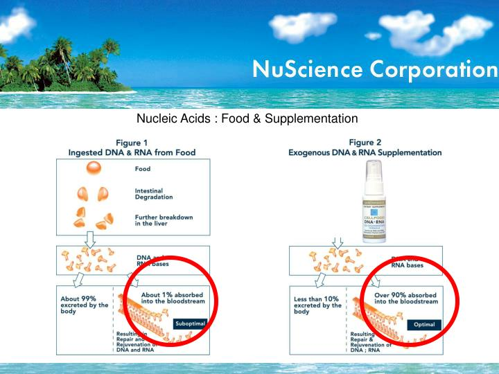 Nucleic Acids : Food & Supplementation