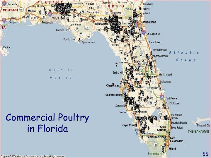 Commercial Poultry in Florida