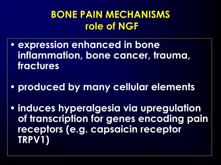 BONE PAIN MECHANISMS