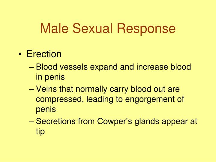 Male Sexual Response
