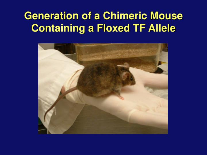 Generation of a Chimeric Mouse Containing a Floxed TF Allele