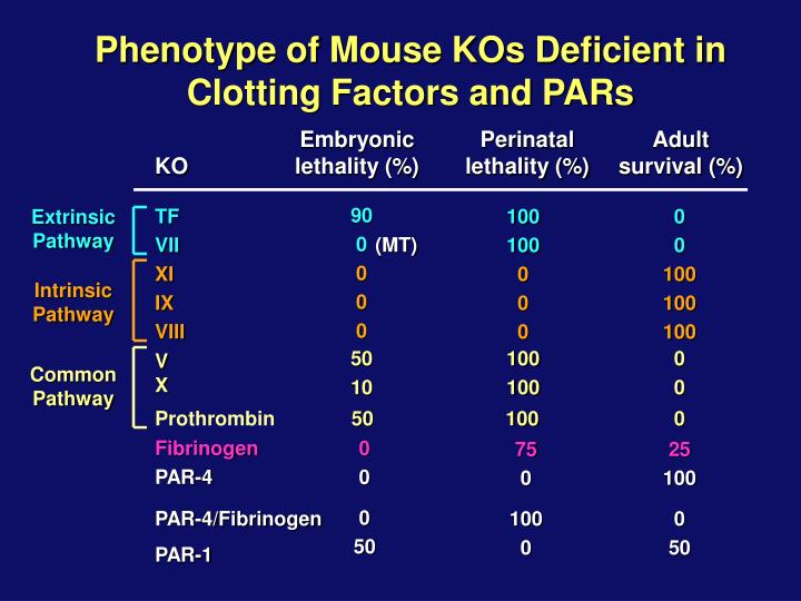 Phenotype of Mouse KOs Deficient in Clotting Factors and PARs