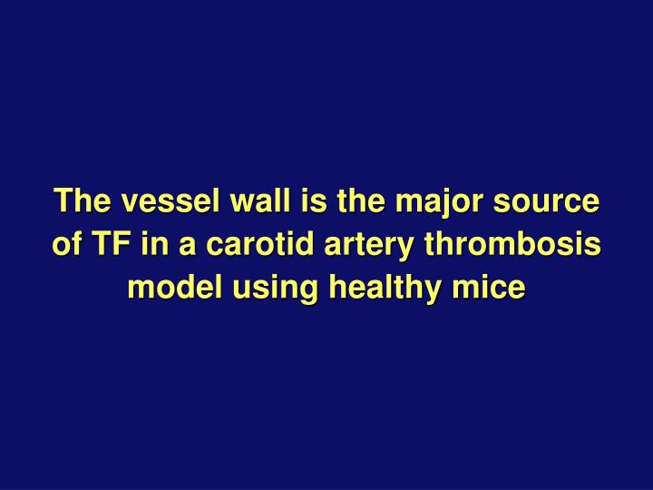 The vessel wall is the major source of TF in a carotid artery thrombosis model using healthy mice