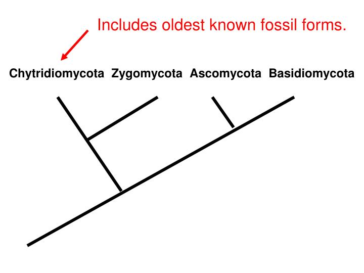 Includes oldest known fossil forms.