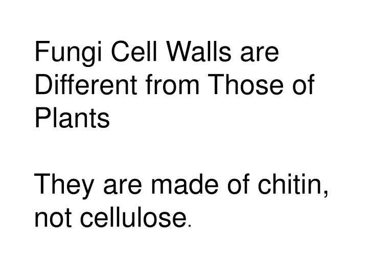Fungi Cell Walls are Different from Those of Plants