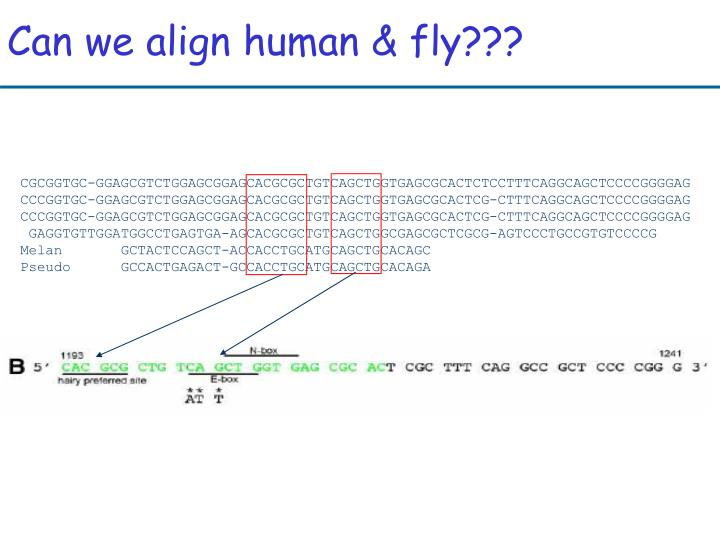 Can we align human & fly???
