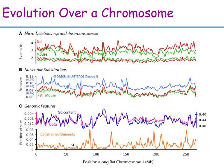 Evolution Over a Chromosome