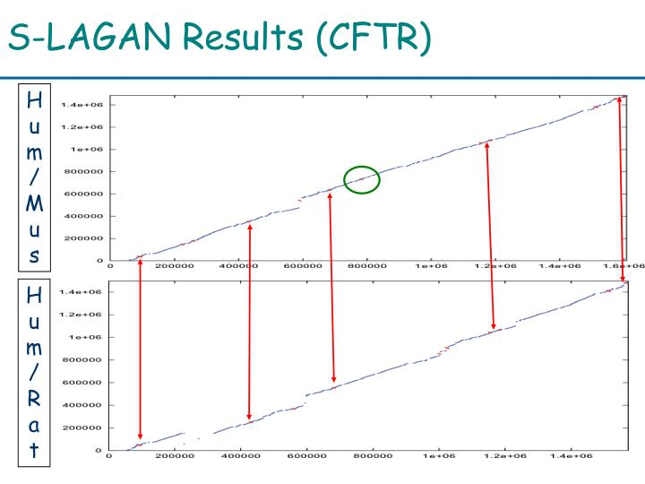 S-LAGAN Results (CFTR)