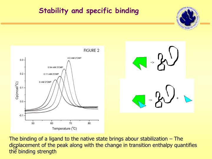 Stability and specific binding