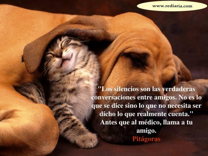 """""""Los silencios son las verdaderas conversaciones entre amigos. No es lo que se dice sino lo que no necesita ser dicho lo que realmente cuenta."""""""