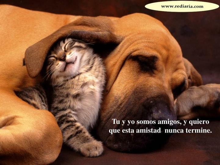 Tu y yo somos amigos, y quiero que esta amistad  nunca termine.
