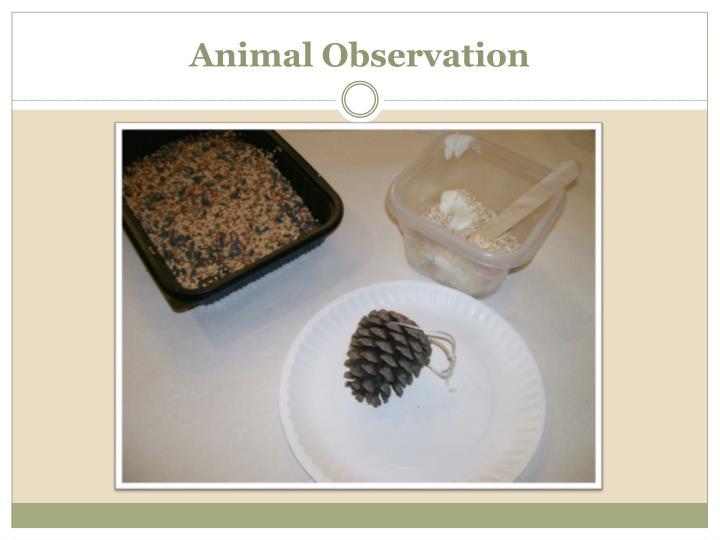 Animal Observation