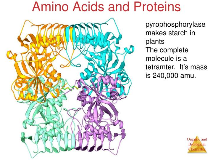 Amino Acids and Proteins