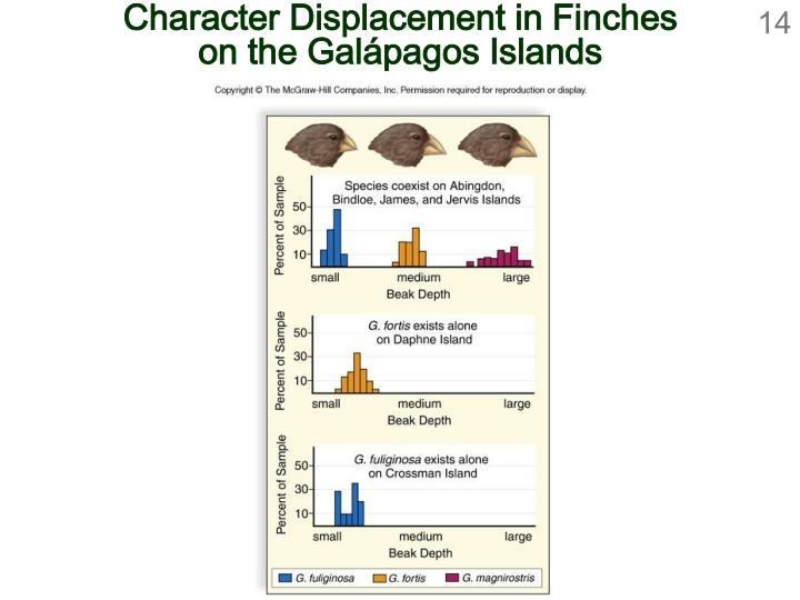 Character Displacement in Finches
