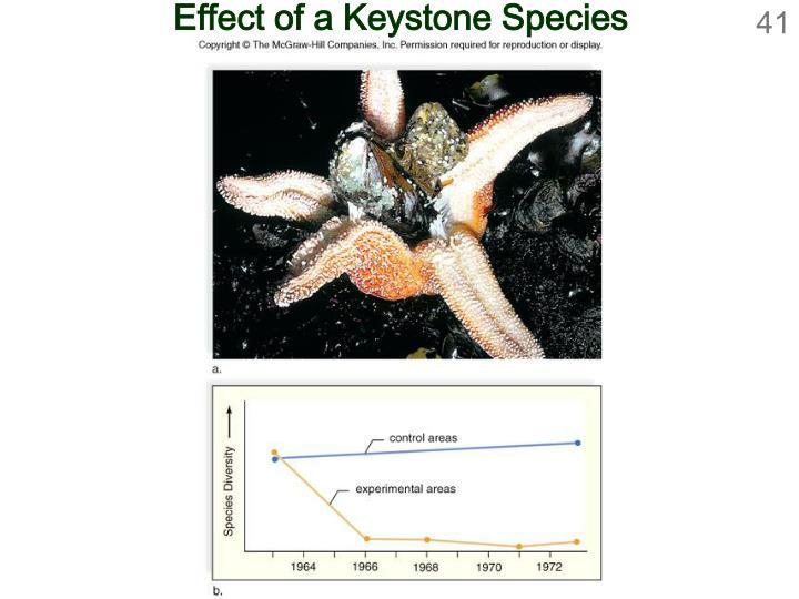 Effect of a Keystone Species