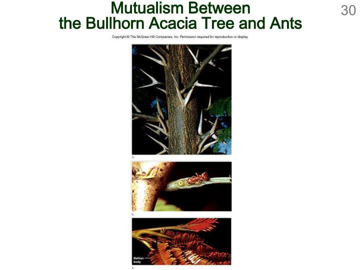 Mutualism Between