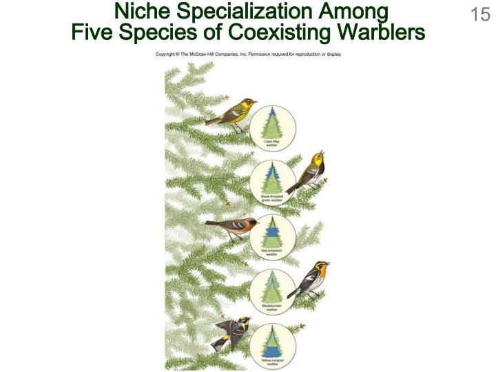 Niche Specialization Among