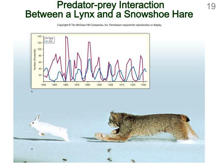 Predator-prey Interaction