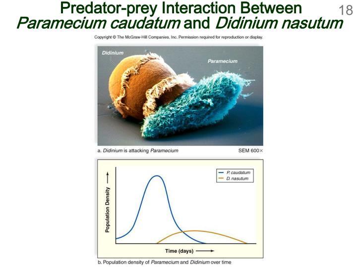 Predator-prey Interaction Between