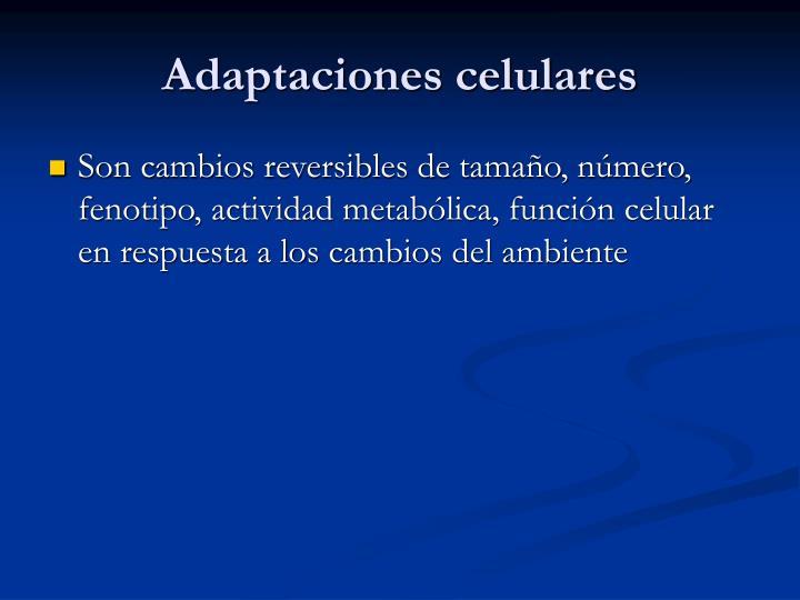 Adaptaciones celulares