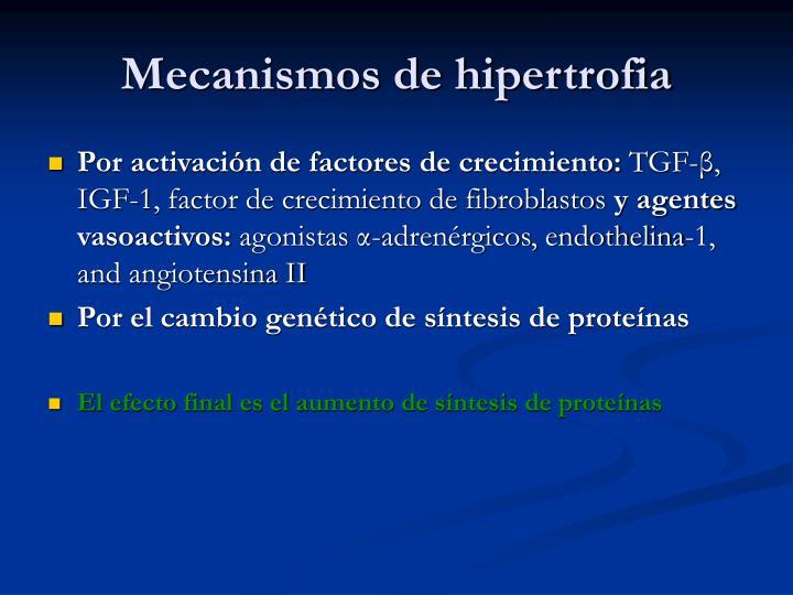 Mecanismos de hipertrofia