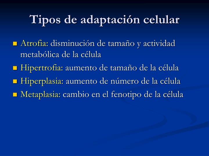 Tipos de adaptación celular