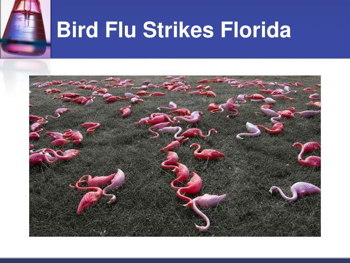 Bird Flu Strikes Florida