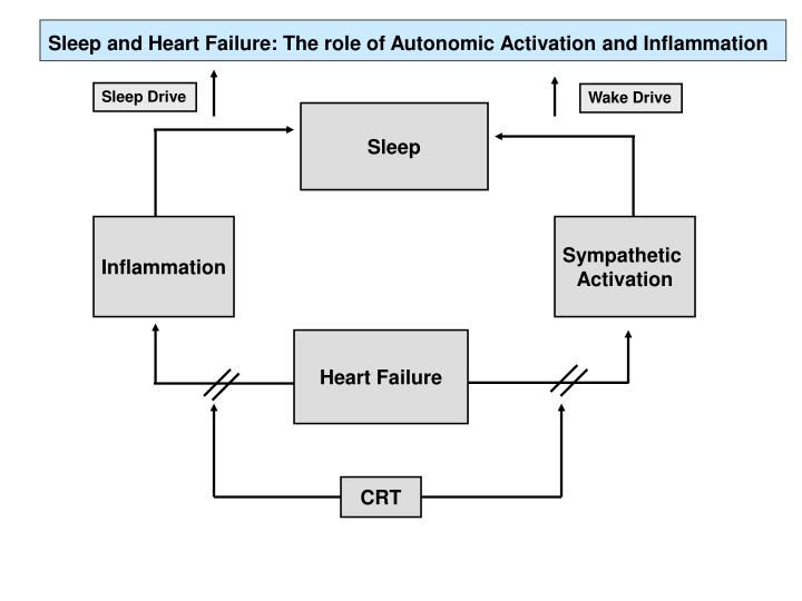 Sleep and Heart Failure: The role of Autonomic Activation and Inflammation