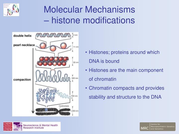Histones; proteins around which DNA is bound