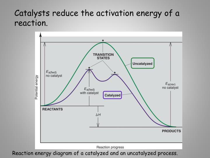 Catalysts reduce the activation energy of a