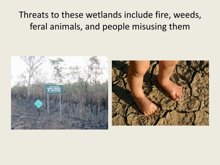 Threats to these wetlands include fire, weeds, feral animals, and people misusing them