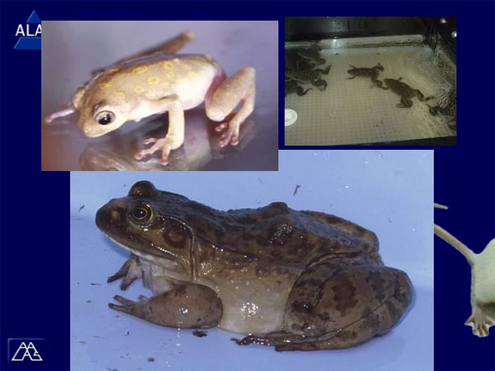 (Images) Frogs