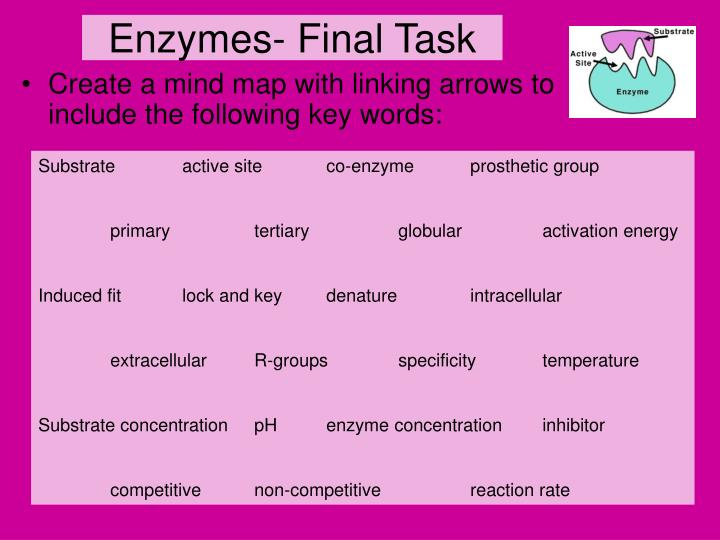 Enzymes- Final Task