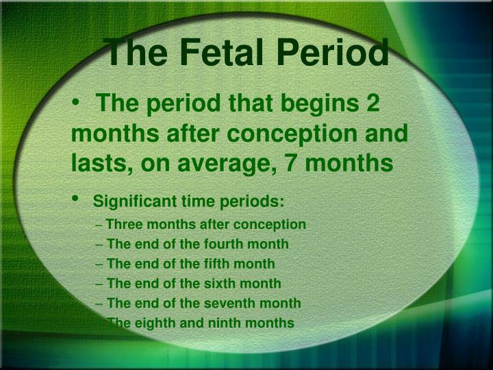 The Fetal Period
