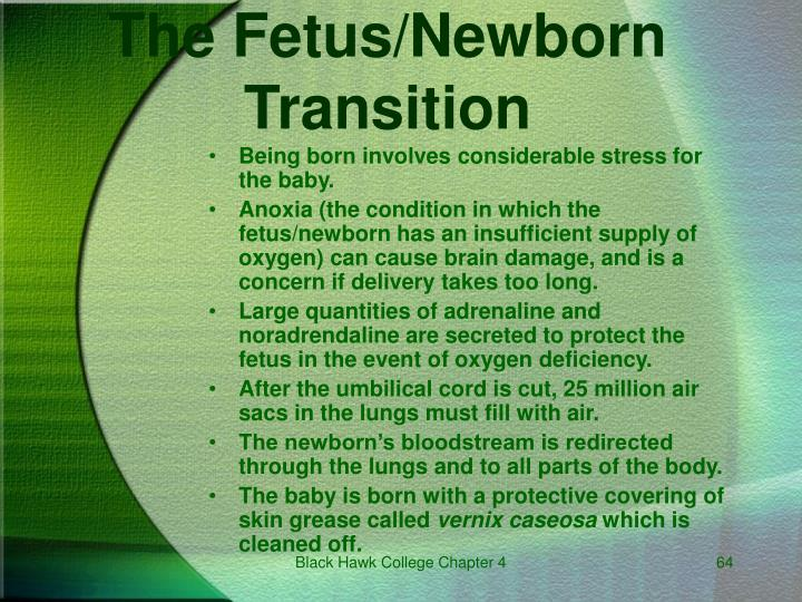 The Fetus/Newborn Transition
