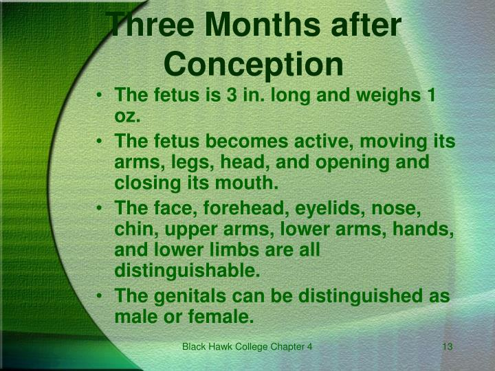 Three Months after Conception