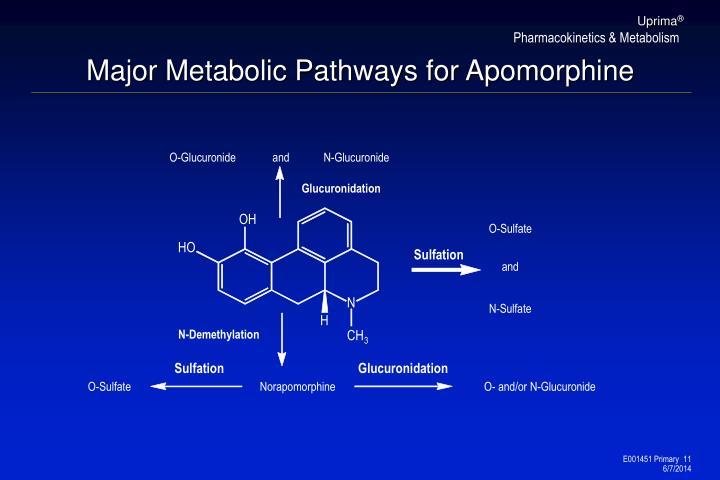 Major Metabolic Pathways for Apomorphine