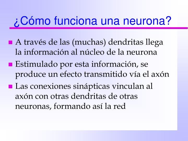¿Cómo funciona una neurona?