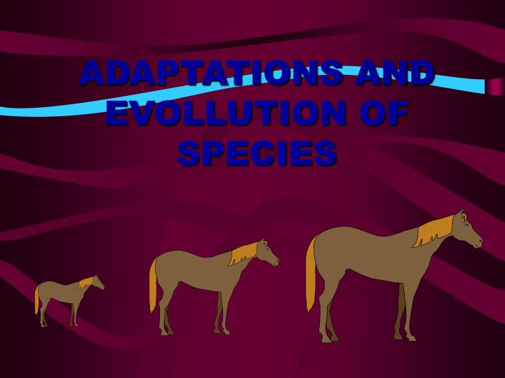ADAPTATIONS AND EVOLLUTION OF SPECIES