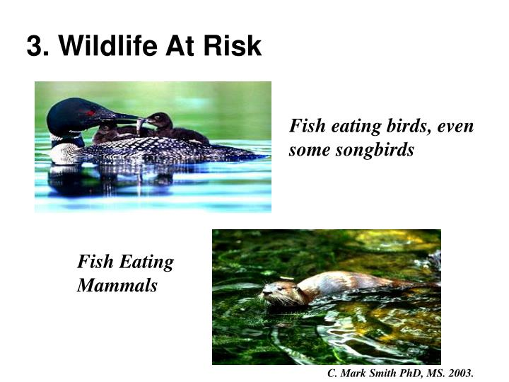 3. Wildlife At Risk