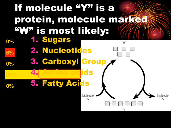 """If molecule """"Y"""" is a protein, molecule marked """"W"""" is most likely:"""
