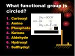 what functional group is circled
