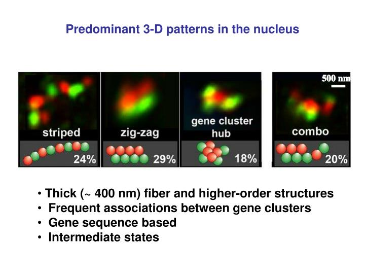 Predominant 3-D patterns in the nucleus