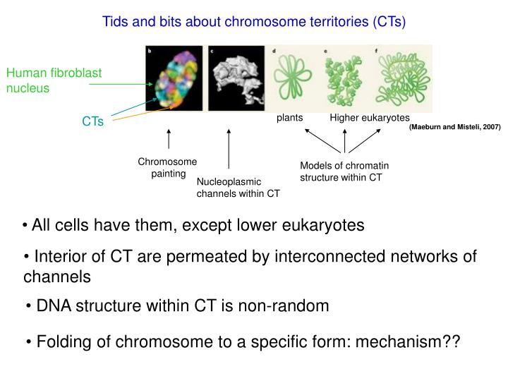 Tids and bits about chromosome territories (CTs)
